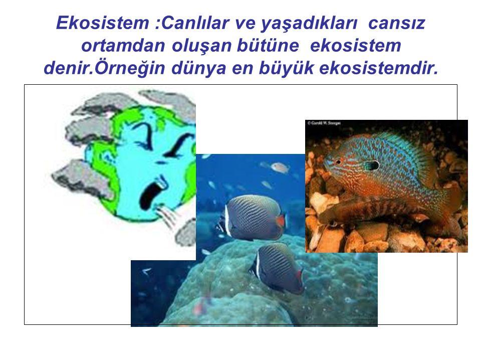Ekosistem :Canlılar ve yaşadıkları cansız ortamdan oluşan bütüne ekosistem denir.Örneğin dünya en büyük ekosistemdir.