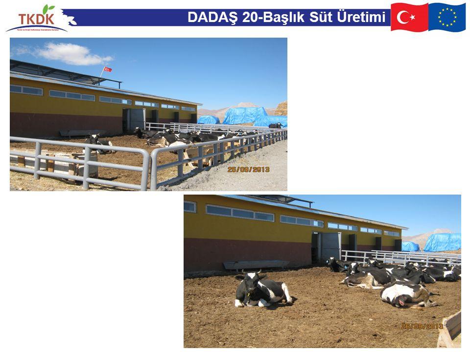 DADAŞ 20-Başlık Süt Üretimi