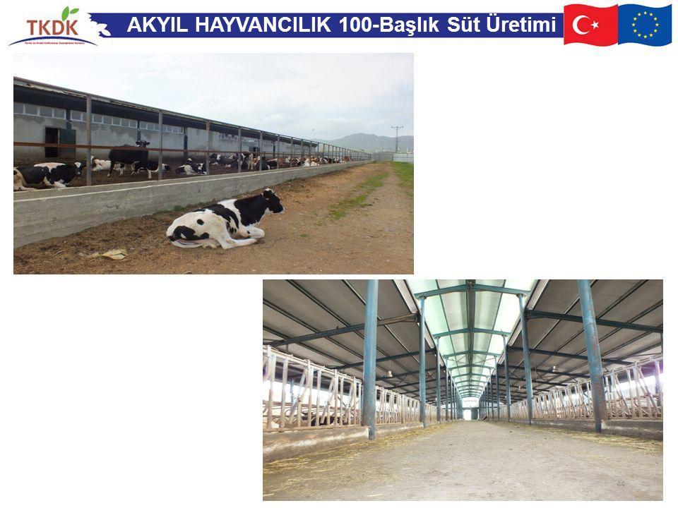 AKYIL HAYVANCILIK 100-Başlık Süt Üretimi