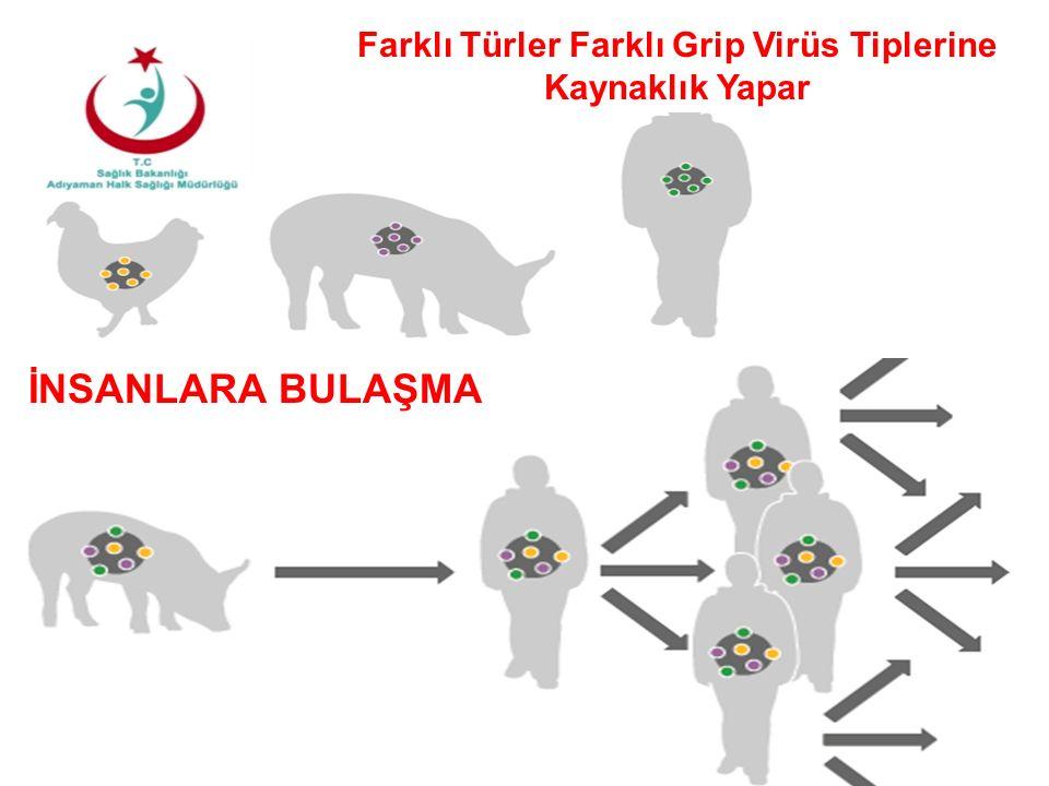 Farklı Türler Farklı Grip Virüs Tiplerine Kaynaklık Yapar