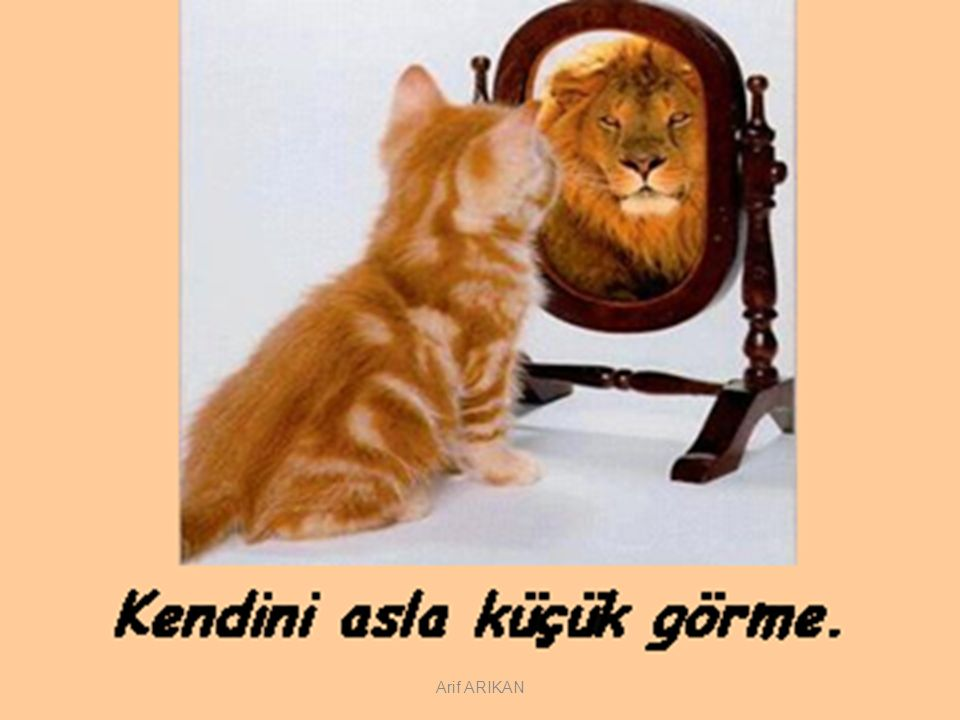 Arif ARIKAN