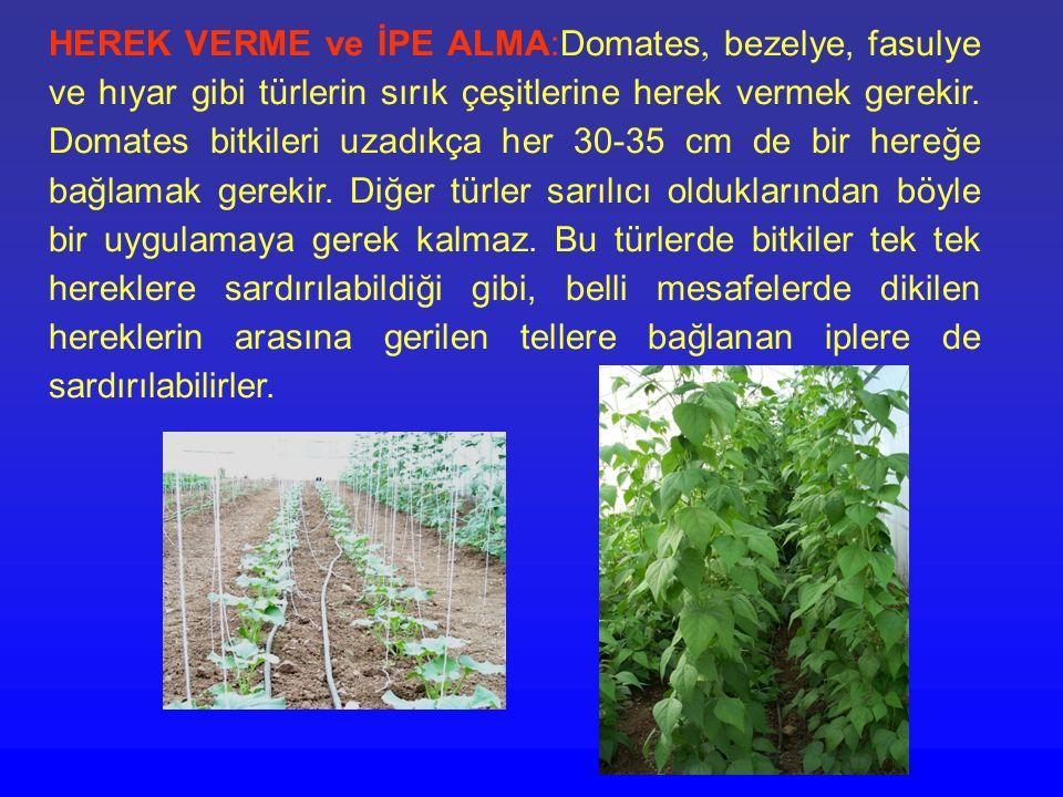 HEREK VERME ve İPE ALMA:Domates, bezelye, fasulye ve hıyar gibi türlerin sırık çeşitlerine herek vermek gerekir.
