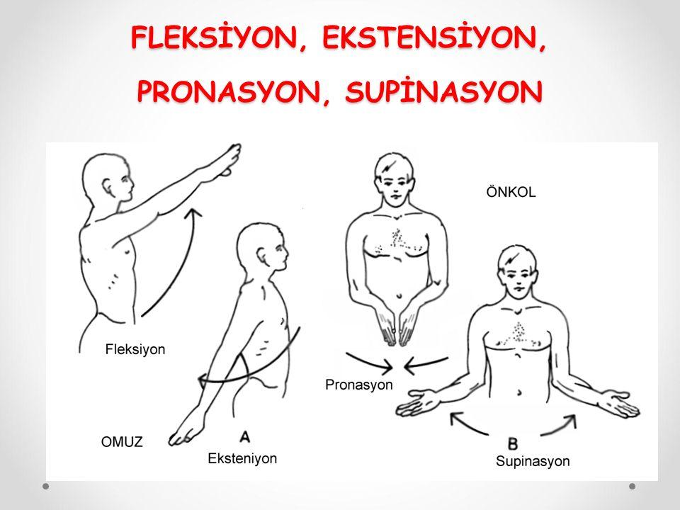 FLEKSİYON, EKSTENSİYON, PRONASYON, SUPİNASYON