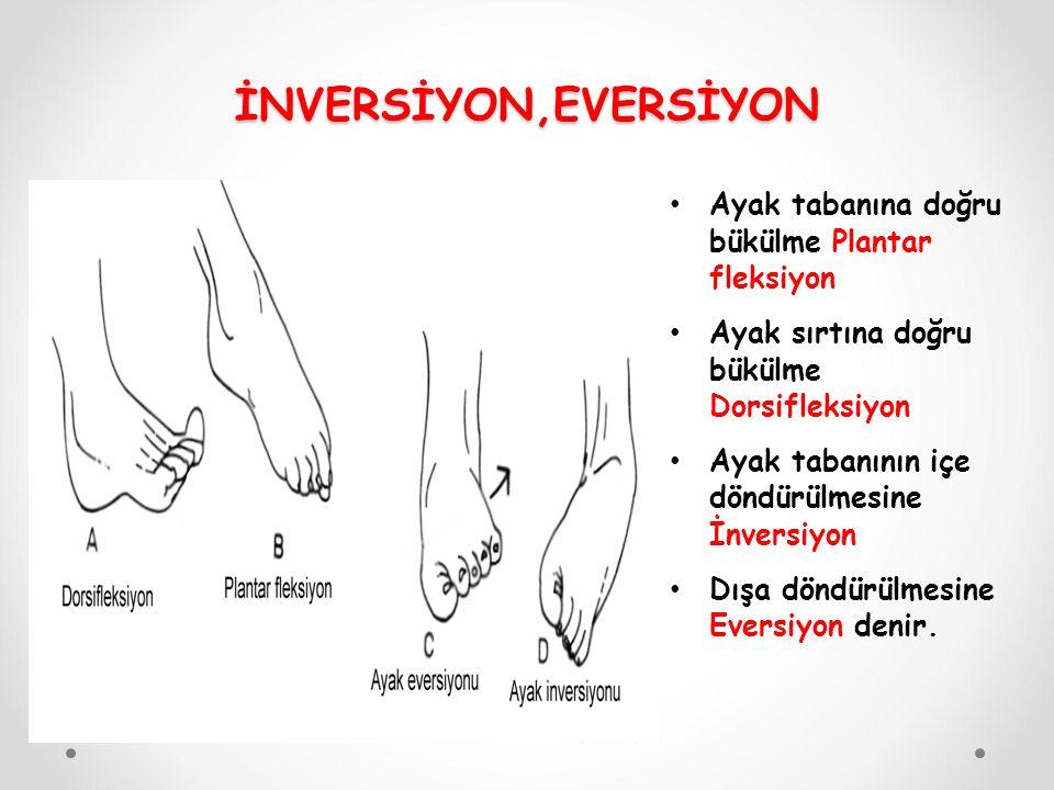 İNVERSİYON,EVERSİYON Ayak tabanına doğru bükülme Plantar fleksiyon