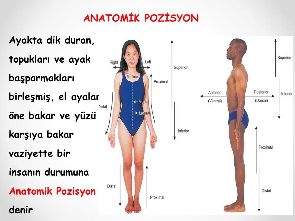 ANATOMİK POZİSYON