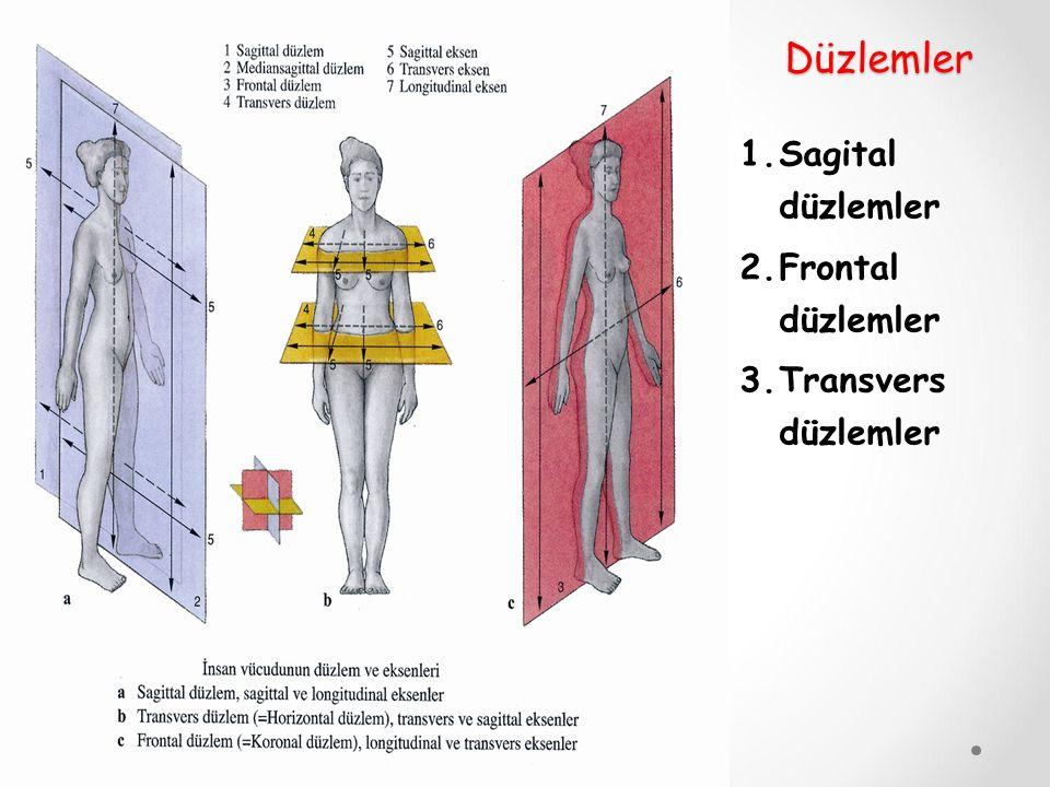 Düzlemler Sagital düzlemler Frontal düzlemler Transvers düzlemler