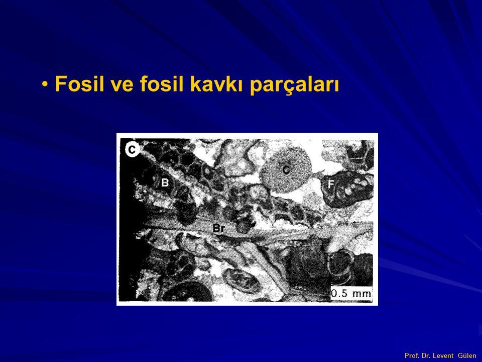 Fosil ve fosil kavkı parçaları