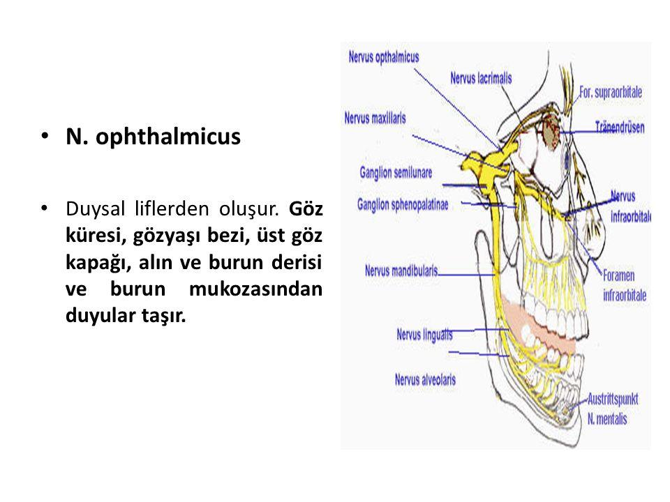 N. ophthalmicus Duysal liflerden oluşur.