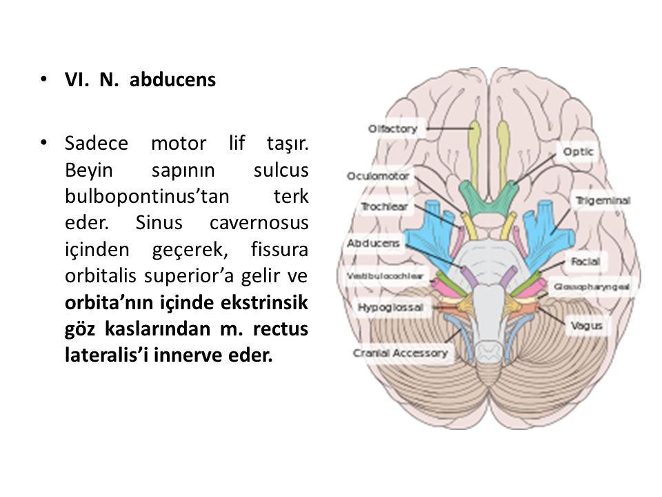 VI. N. abducens