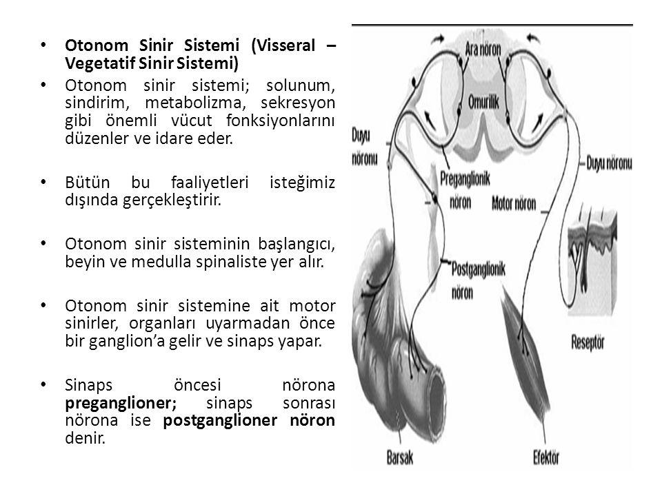 Otonom Sinir Sistemi (Visseral – Vegetatif Sinir Sistemi)