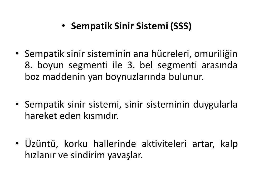 Sempatik Sinir Sistemi (SSS)