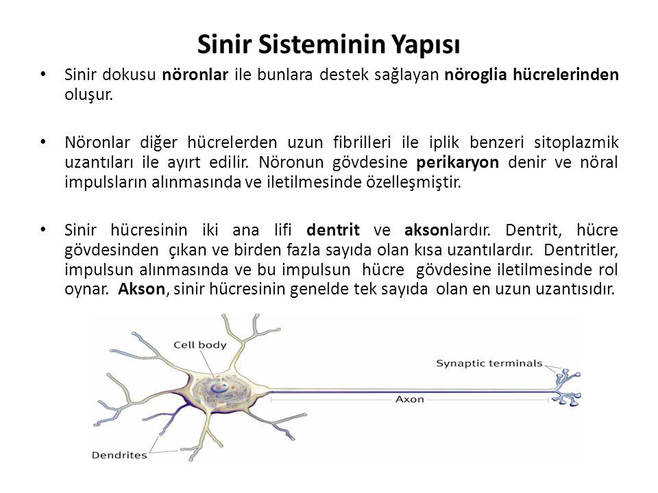 Sinir Sisteminin Yapısı