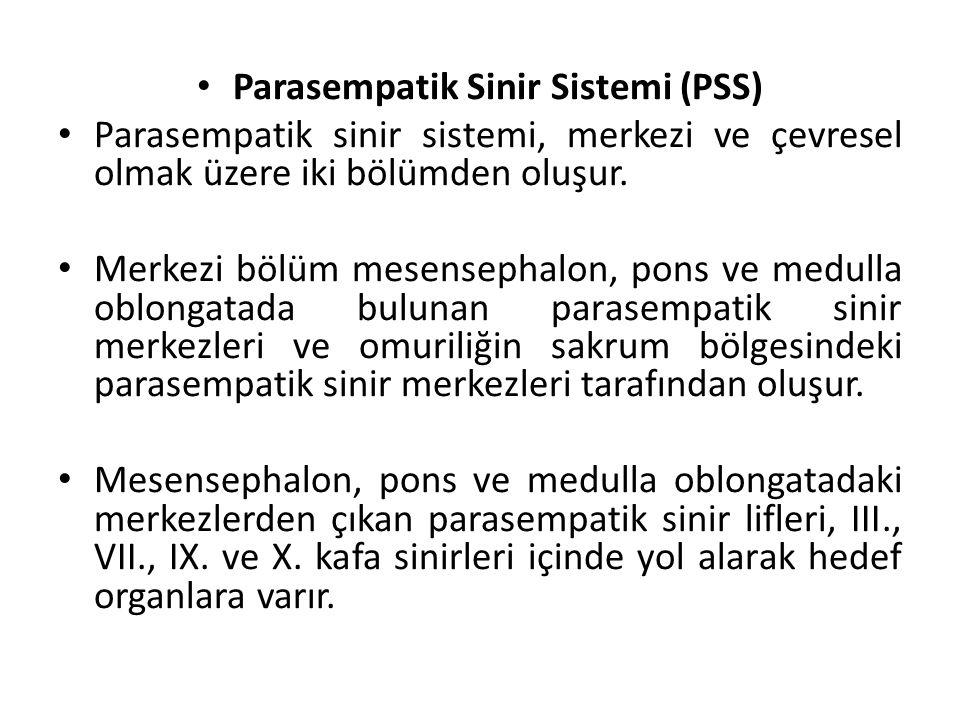 Parasempatik Sinir Sistemi (PSS)
