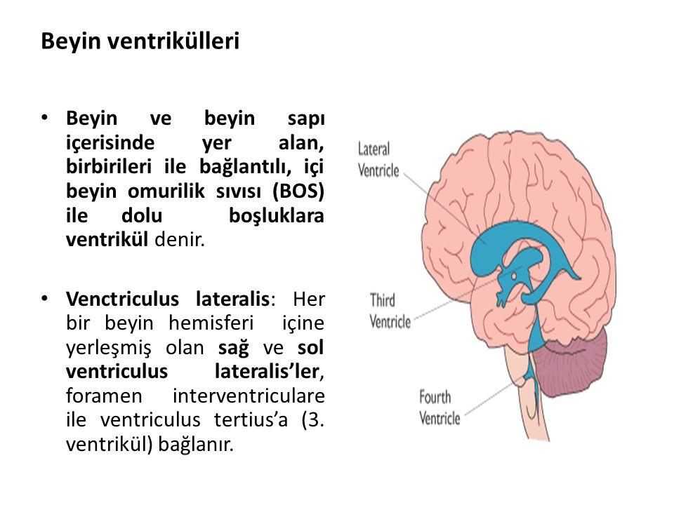 Beyin ventrikülleri