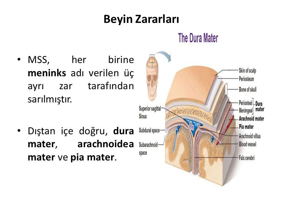 Beyin Zararları MSS, her birine meninks adı verilen üç ayrı zar tarafından sarılmıştır.