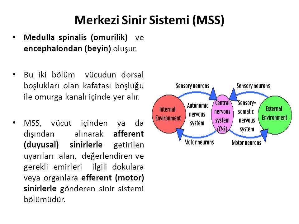 Merkezi Sinir Sistemi (MSS)