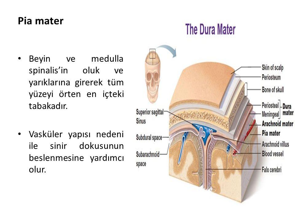 Pia mater Beyin ve medulla spinalis'in oluk ve yarıklarına girerek tüm yüzeyi örten en içteki tabakadır.