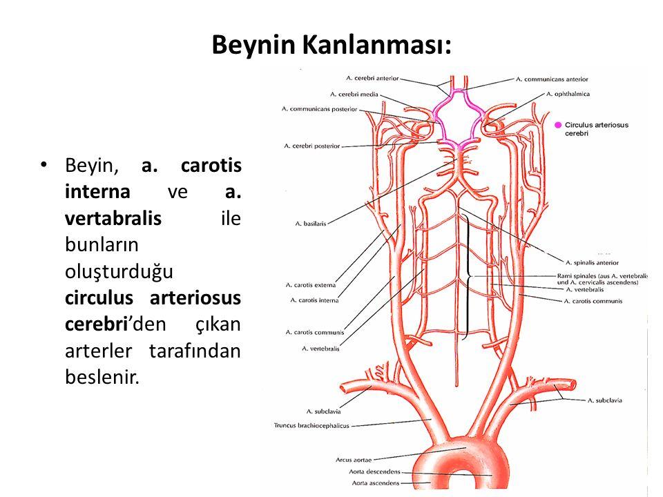 Beynin Kanlanması: