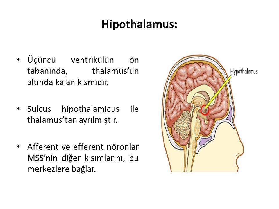 Hipothalamus: Üçüncü ventrikülün ön tabanında, thalamus'un altında kalan kısmıdır. Sulcus hipothalamicus ile thalamus'tan ayrılmıştır.
