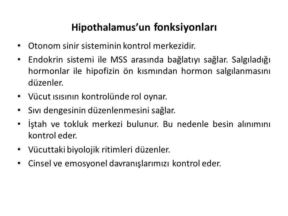 Hipothalamus'un fonksiyonları