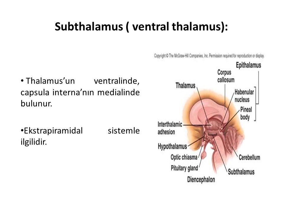 Subthalamus ( ventral thalamus):