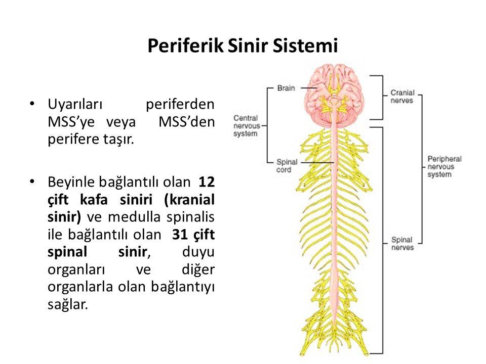 Periferik Sinir Sistemi