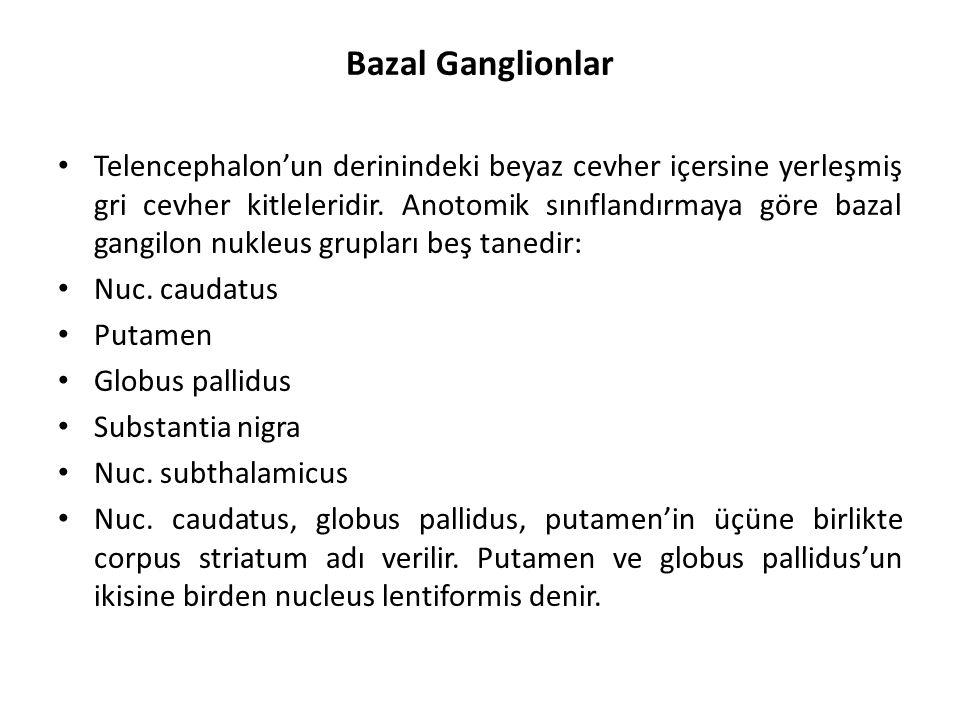 Bazal Ganglionlar