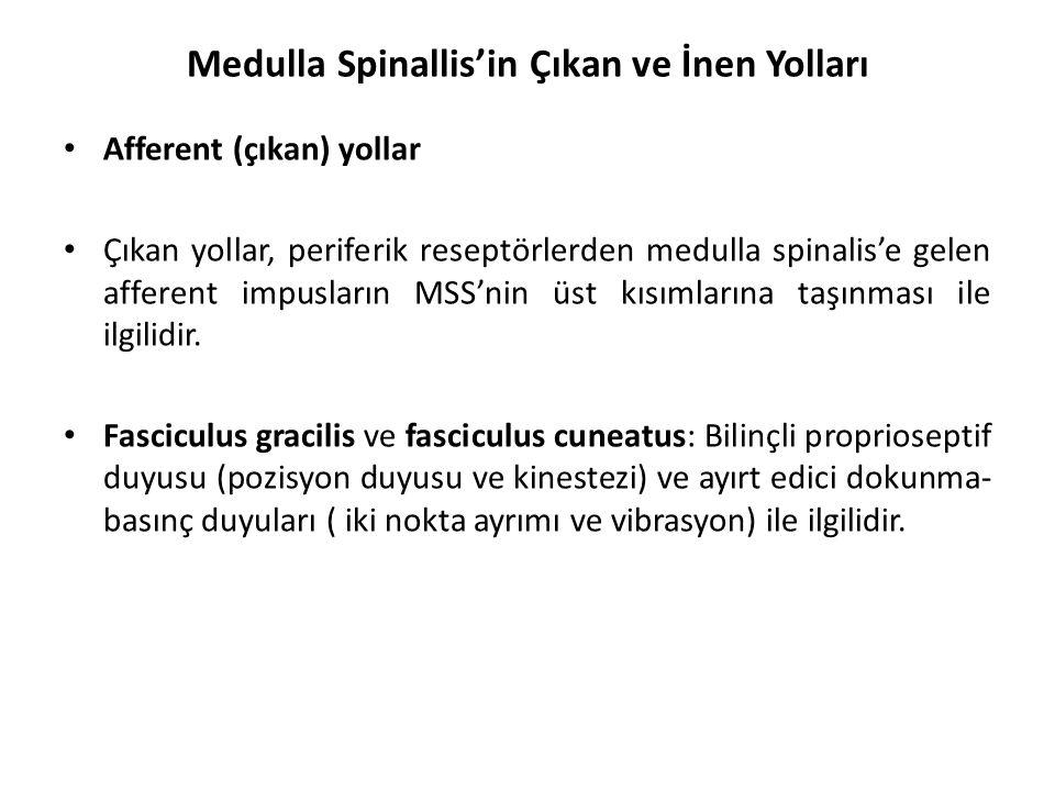 Medulla Spinallis'in Çıkan ve İnen Yolları