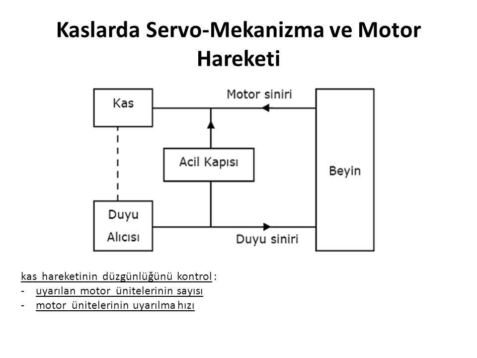 Kaslarda Servo-Mekanizma ve Motor Hareketi