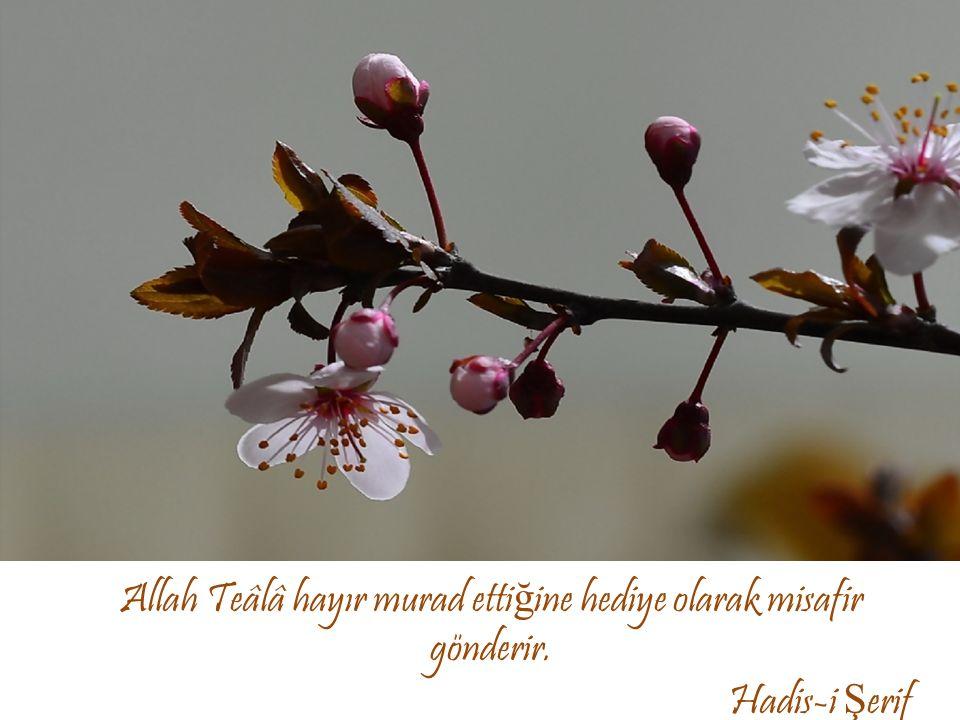 Allah Teâlâ hayır murad ettiğine hediye olarak misafir gönderir