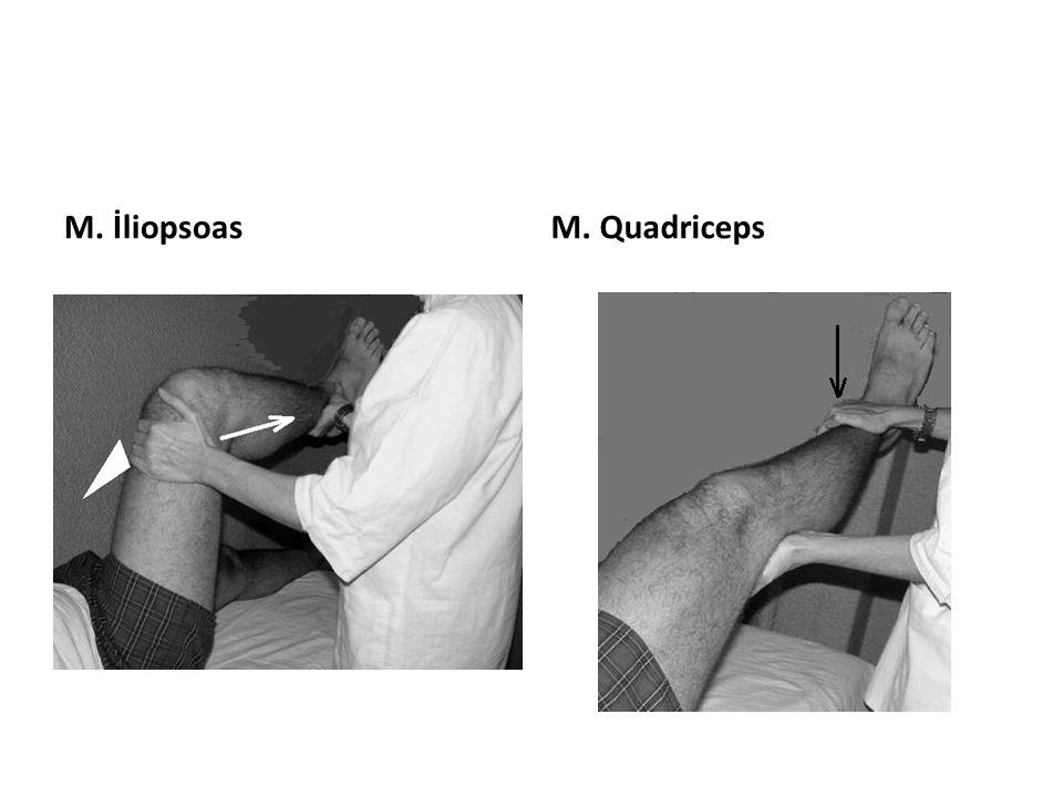 M. İliopsoas M. Quadriceps