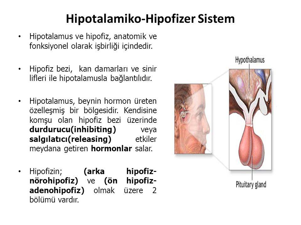 Hipotalamiko-Hipofizer Sistem