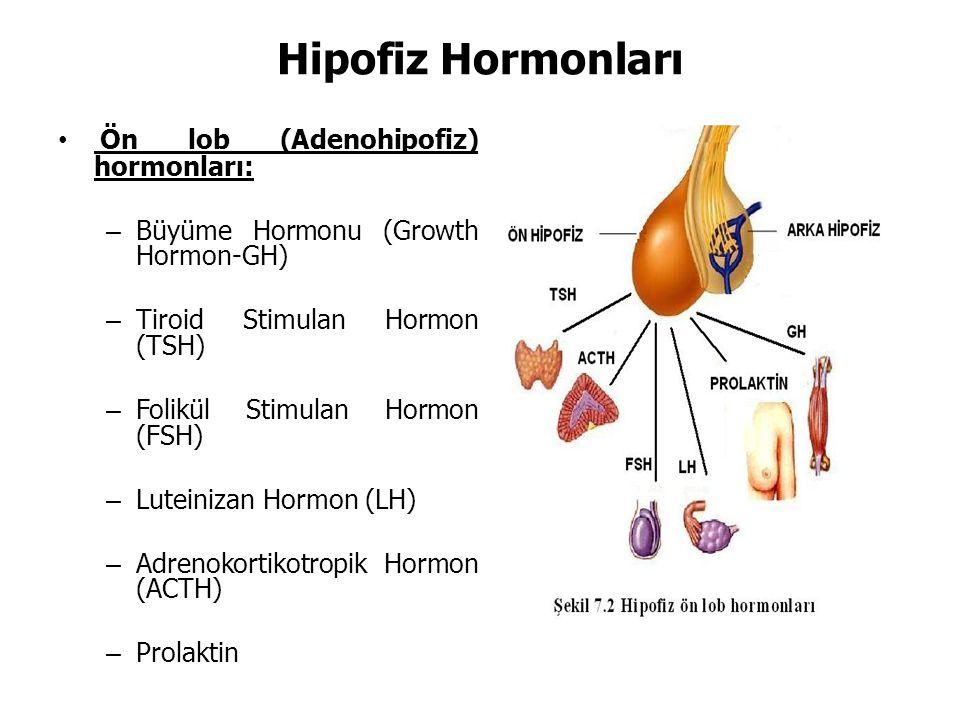 Hipofiz Hormonları Ön lob (Adenohipofiz) hormonları: