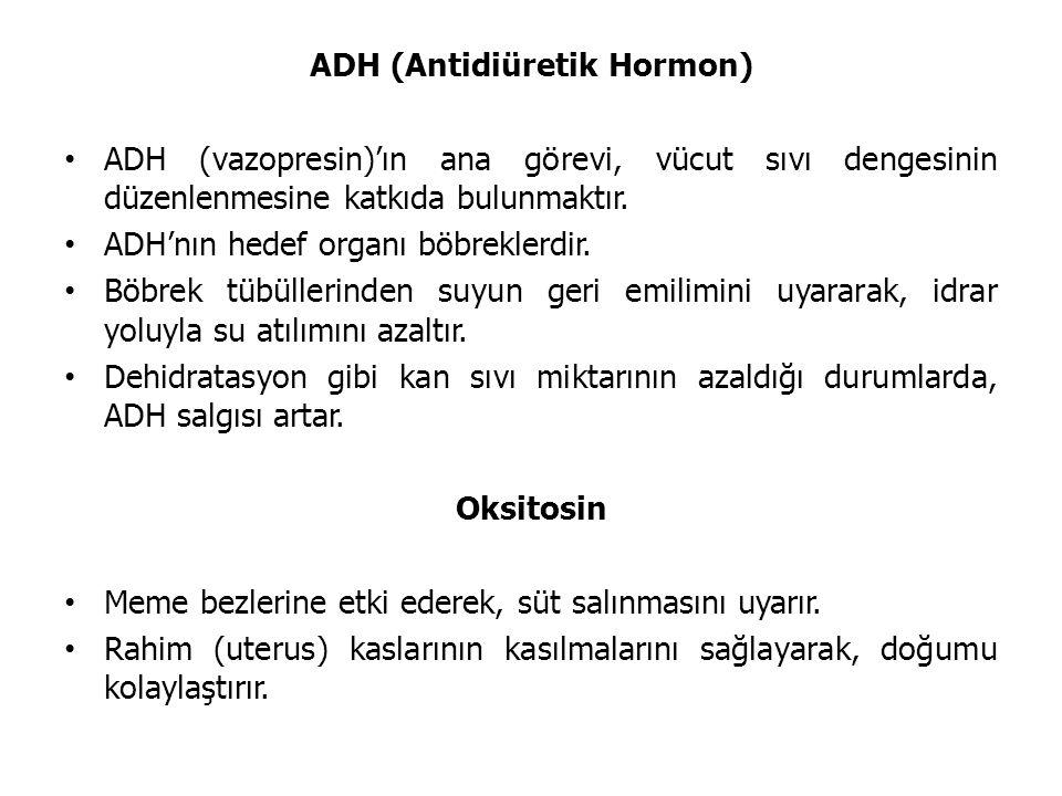 ADH (Antidiüretik Hormon)