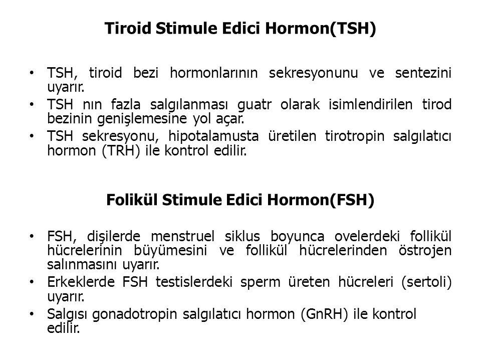 Tiroid Stimule Edici Hormon(TSH)