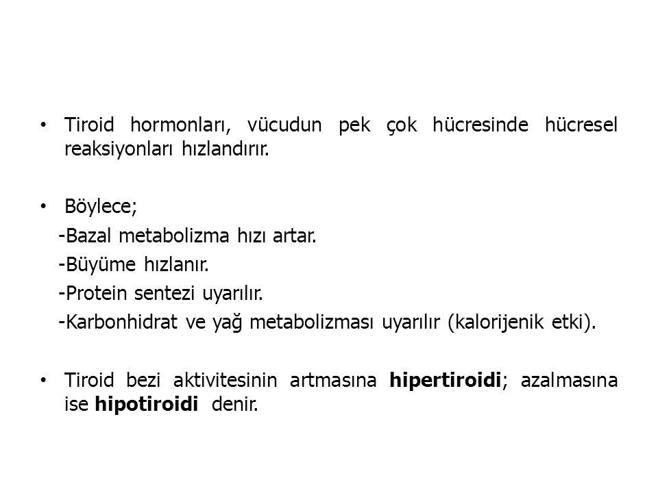 Tiroid hormonları, vücudun pek çok hücresinde hücresel reaksiyonları hızlandırır.