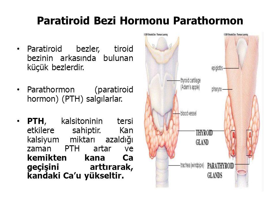 Paratiroid Bezi Hormonu Parathormon