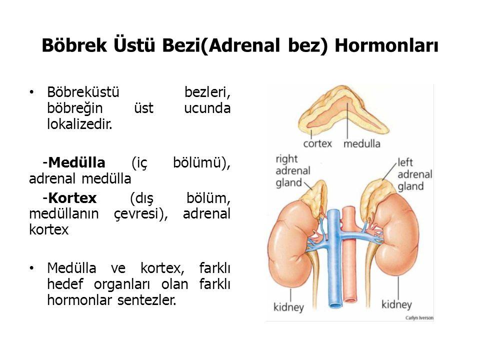 Böbrek Üstü Bezi(Adrenal bez) Hormonları
