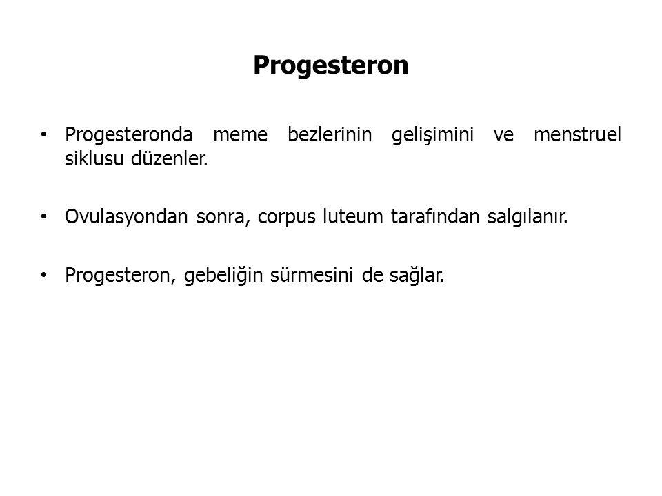 Progesteron Progesteronda meme bezlerinin gelişimini ve menstruel siklusu düzenler. Ovulasyondan sonra, corpus luteum tarafından salgılanır.