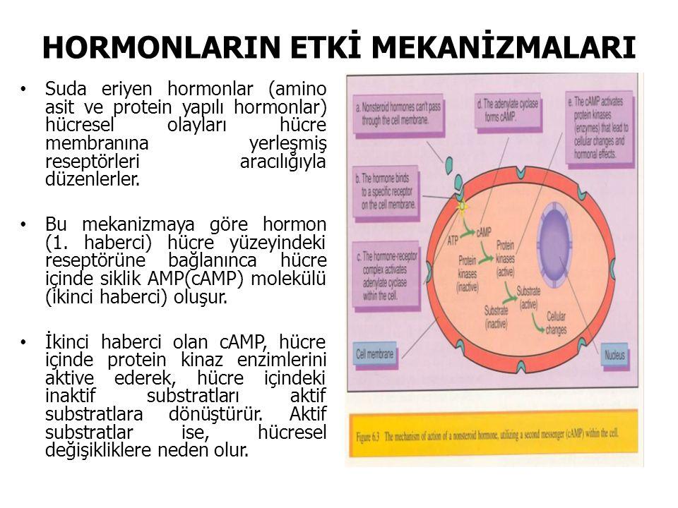 HORMONLARIN ETKİ MEKANİZMALARI