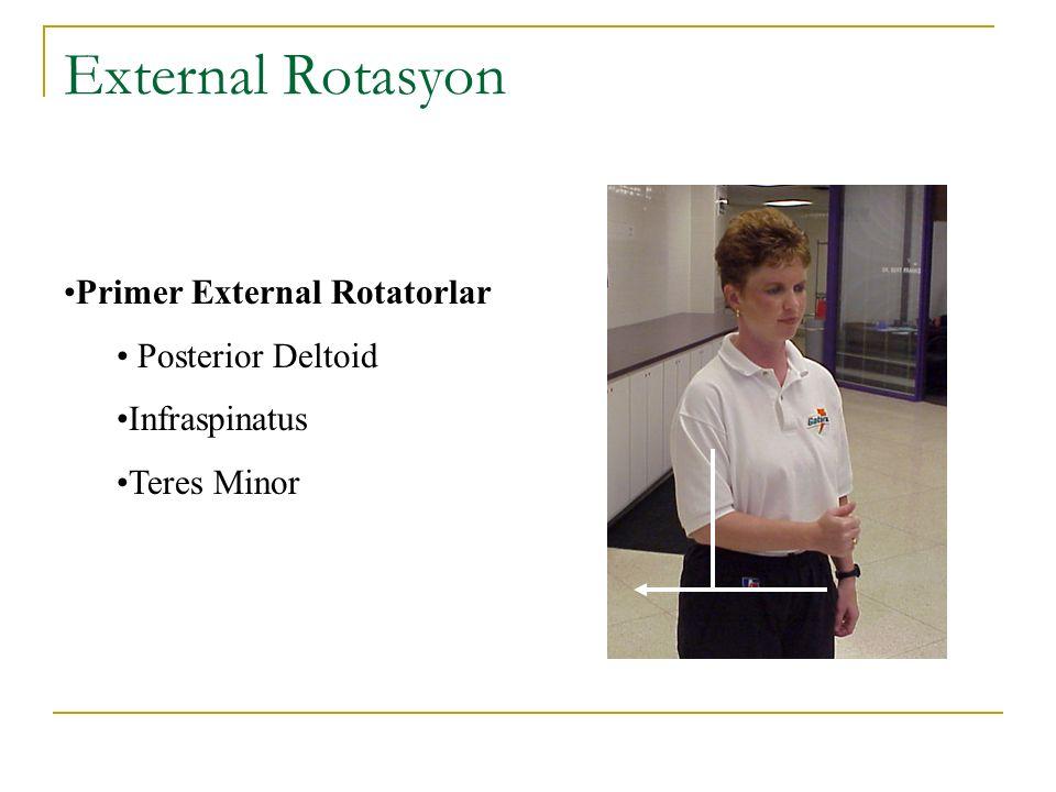 External Rotasyon Primer External Rotatorlar Posterior Deltoid