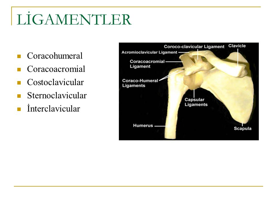 LİGAMENTLER Coracohumeral Coracoacromial Costoclavicular
