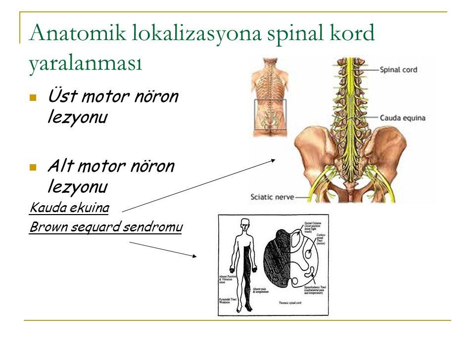 Anatomik lokalizasyona spinal kord yaralanması