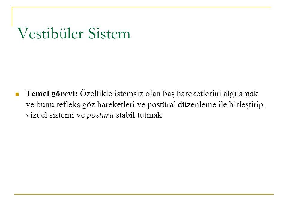 Vestibüler Sistem