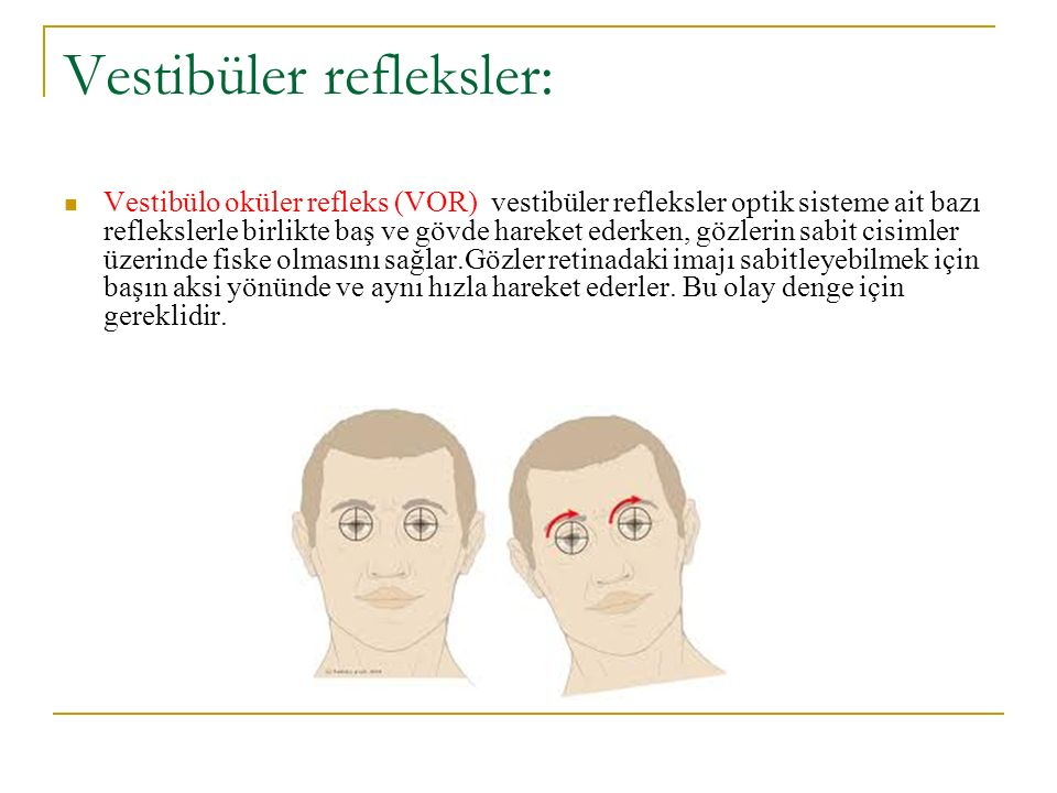 Vestibüler refleksler: