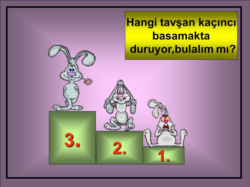 Hangi tavşan kaçıncı basamakta duruyor,bulalım mı 3. 2. 1.