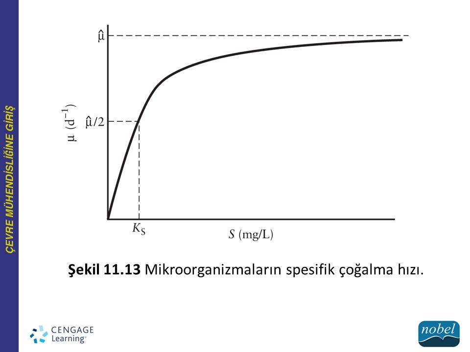 Şekil 11.13 Mikroorganizmaların spesifik çoğalma hızı.