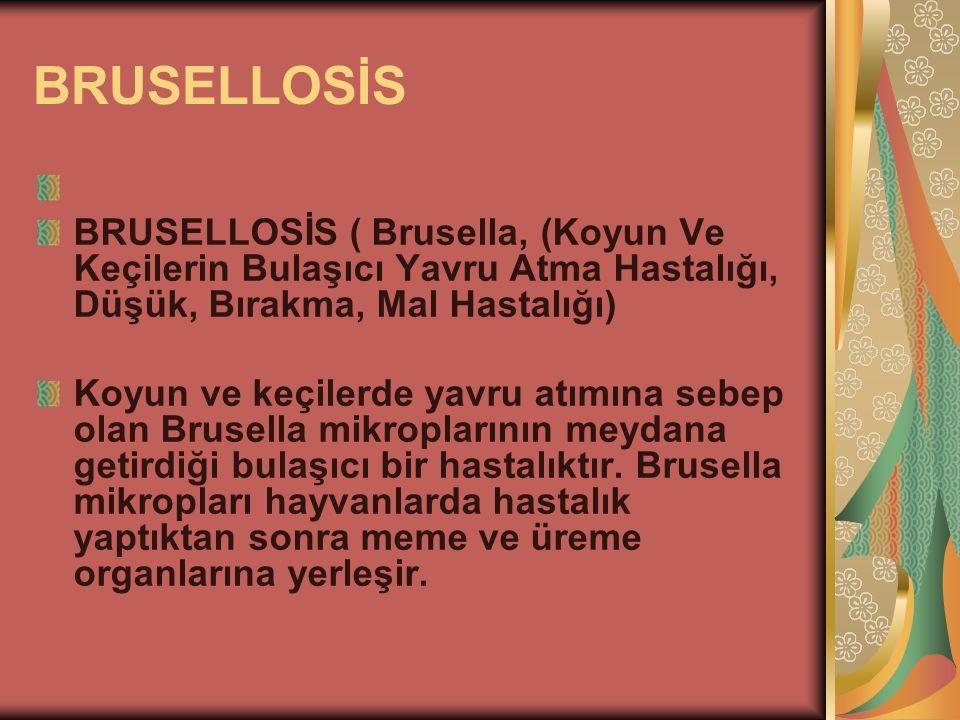BRUSELLOSİS BRUSELLOSİS ( Brusella, (Koyun Ve Keçilerin Bulaşıcı Yavru Atma Hastalığı, Düşük, Bırakma, Mal Hastalığı)