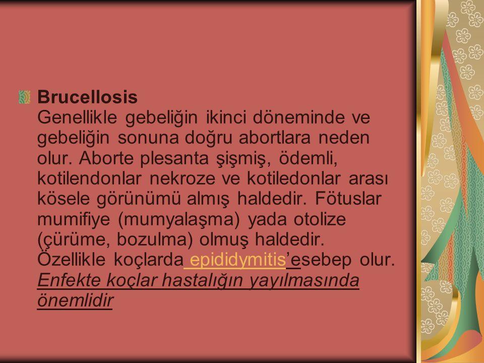 Brucellosis Genellikle gebeliğin ikinci döneminde ve gebeliğin sonuna doğru abortlara neden olur.