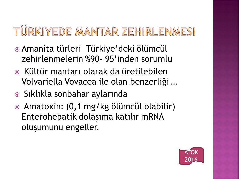 Türkiyede mantar zehirlenmesi